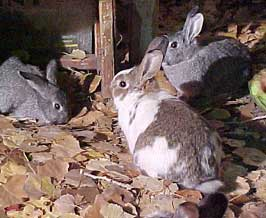 bunnytown rabbits