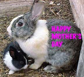 bunny mother, bunnytown
